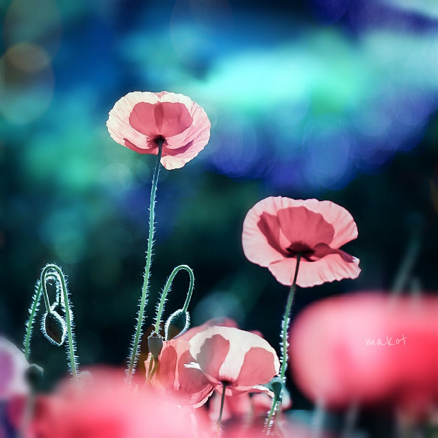 #FreeToEdit  #bokeh #colorful #flower #love #cute #nature #photography #macro #spring