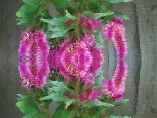 photograph mirrored madewithpicsart paphotochallenge