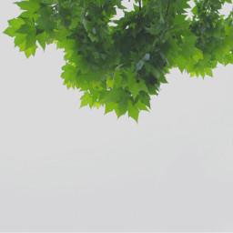minimalism leaves lakeside jonniejonnie freetoedit