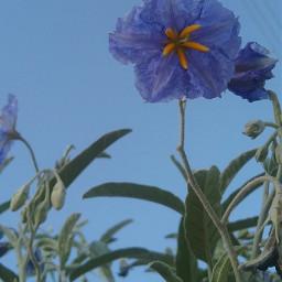 wildflowers wppflowers