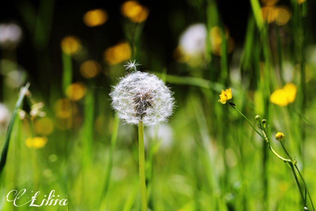 #FreeToEdit #nature #photography #flower