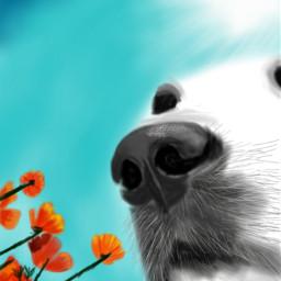 wdpflowerfield flowers dog