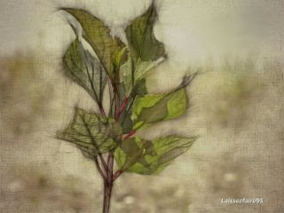 photography nature pencilart