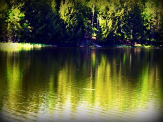 nature pond green photography
