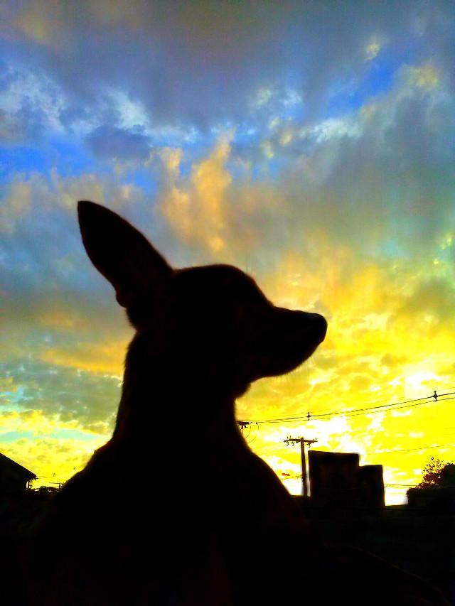 Good Morning dear friends :) #Silhouette #pet #sky #summer #sun #LifeStyle