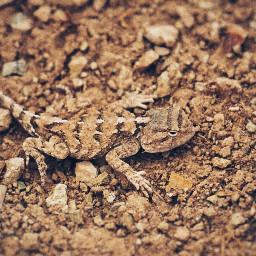 animal salamander wildlife camouflage photography