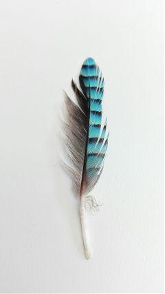 freetoedit feather colorful petsandanimals texture