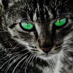 edited cat pets green lifestyle freetoedit