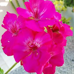 flower pink macro spring colorful