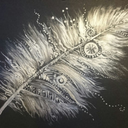 feather drawing art