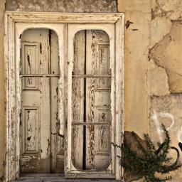 abandonedhouse window wildplant photography