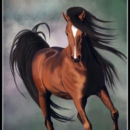 wdpwindy drawing mysrawing art horse