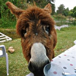 hdr animal nature petsandanimals donkey