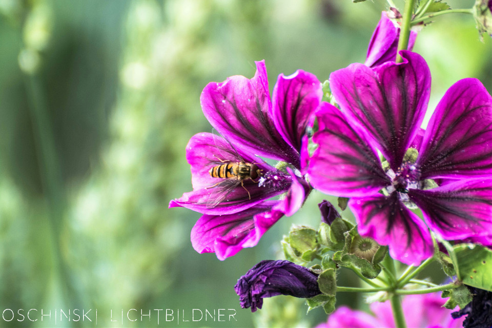 #flower #colorful #nature #insect #bokeh #photography #summer