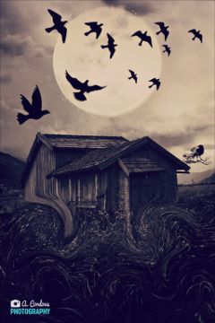 house birds moon madewithwindows10 getsurreal