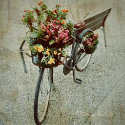 flower flowers stampinato fantasy cute freetoedit