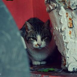 freetoedit cat cats petsandanimals