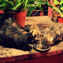 freetoedit eat cats cat petsandanimals