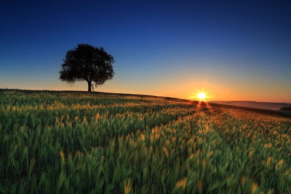 Morning Light, Blackwood Forrest, Germany If you like my work, follow me www.facebook.com/Aperture.8.Lichtmomente/ #landscape landscape #landscapephotography #landscape_captures #landscape_lovers #naturephotography #nature nature #nationalgeographic