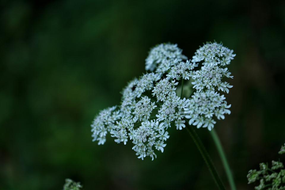 Wild Flowers.. #photography #bokeh  #flower #nature #travel #bavaria