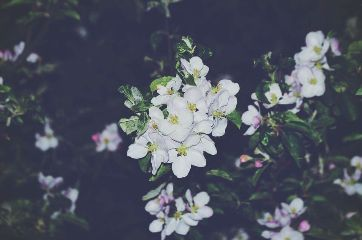white flowers night grunge spring freetoedit