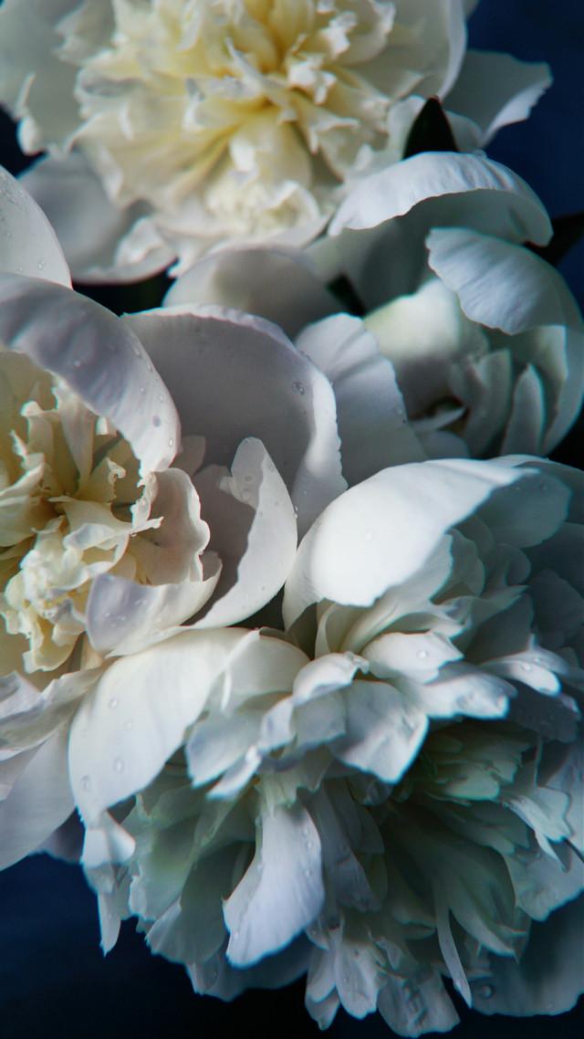 #flowers #peonies #summer