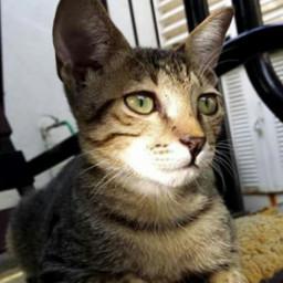 wppcatears petsandanimals photography cute cat