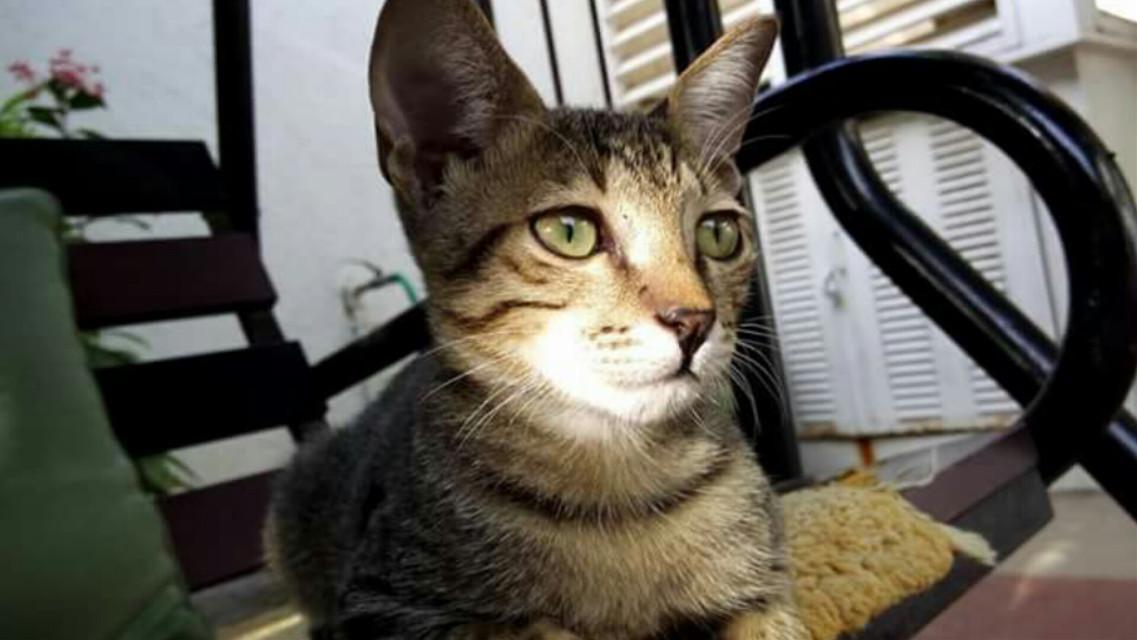#wppcatears#petsandanimals #photography #cute #cat