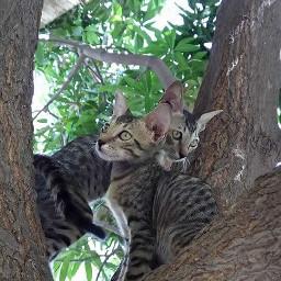 wppcatears petsandanimals photography cats nature
