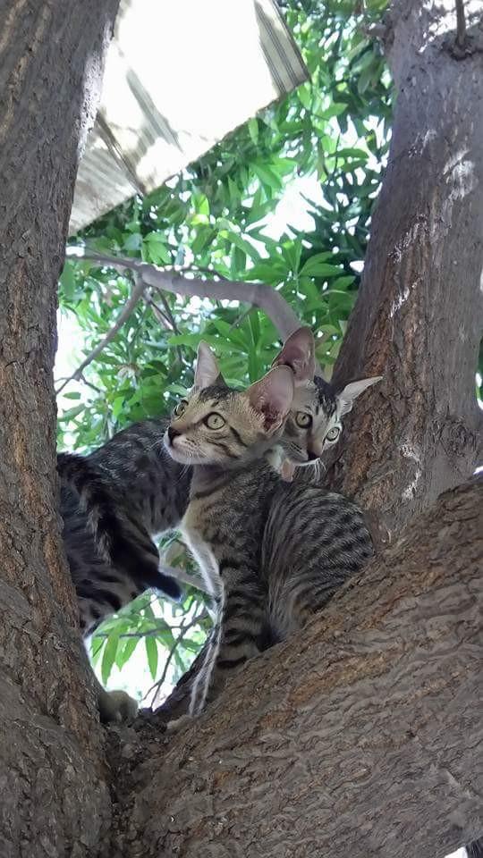 #wppcatears#petsandanimals #photography #cats #nature