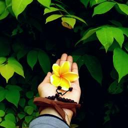 FreeToEdit flower nature yellow freetoedit photography minimalist