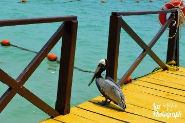 beach dock birdsphotography birdwatching saturated