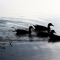 silhouetteart nettesdailyinspiration water lake birds