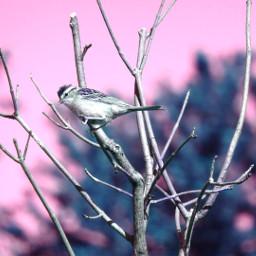 nettesdailyinspiration colorchangeup bird nature