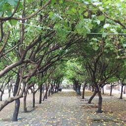 trees symmetry nature photography freetoedit