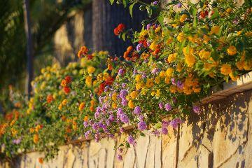 wppfloralcanvas love flower summer colorful