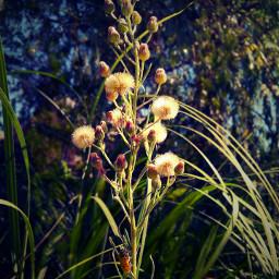nature naturebeauty flower photography wildflower