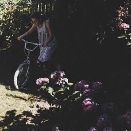 garden summer bike flowers photography