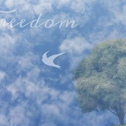 freedom tree bird sky