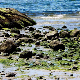 summer beach ocean sea shore