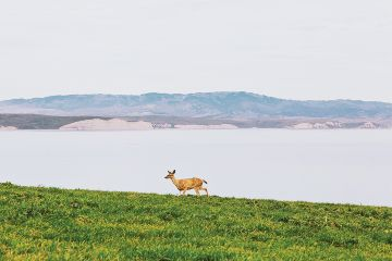 freetoedit nature lake deer wildlife