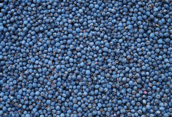 nature berries blue texture background freetoedit