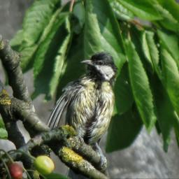 birds petsandanimals naturephotography wildlife garden