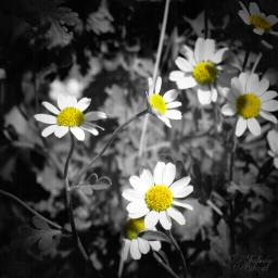 flower summer nature plant