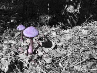nature mushroom colorsplash saturday walk