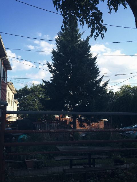 #photography,#backyard,#trees,#saterdays,#freetoedit