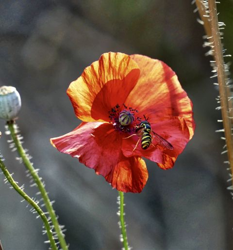#nature,#landscape,#flower,#bee,#freetoedit