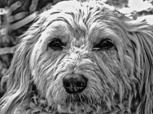 #nature,#dog,#hd,#blackandwhite,#freetoedit